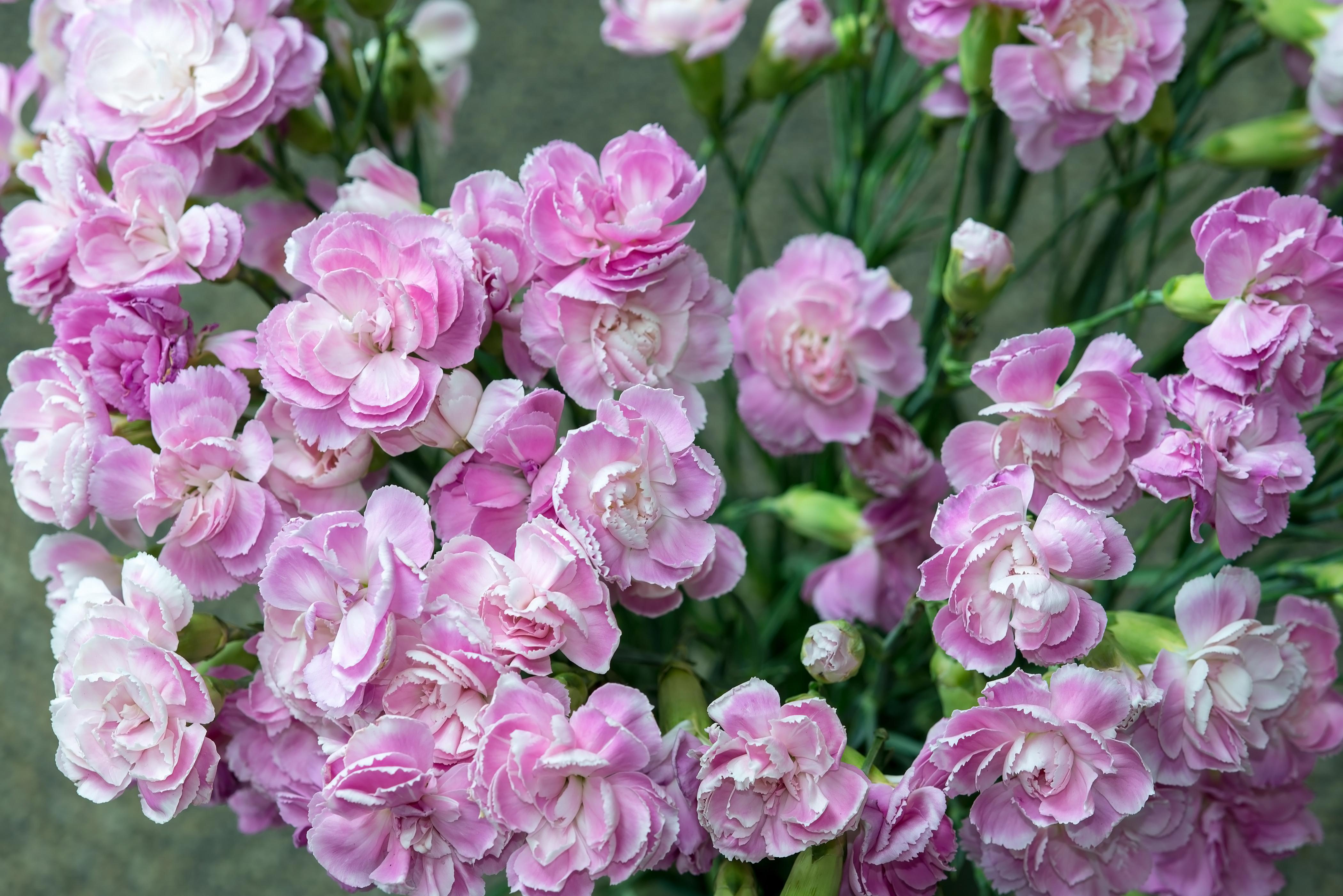 Fall Wedding Flowers   Mini Carnations Wedding Bouquet