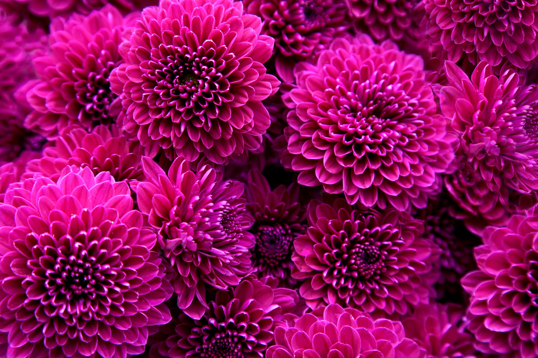 Fall Wedding Flowers   Dahlia Wedding Bouquet