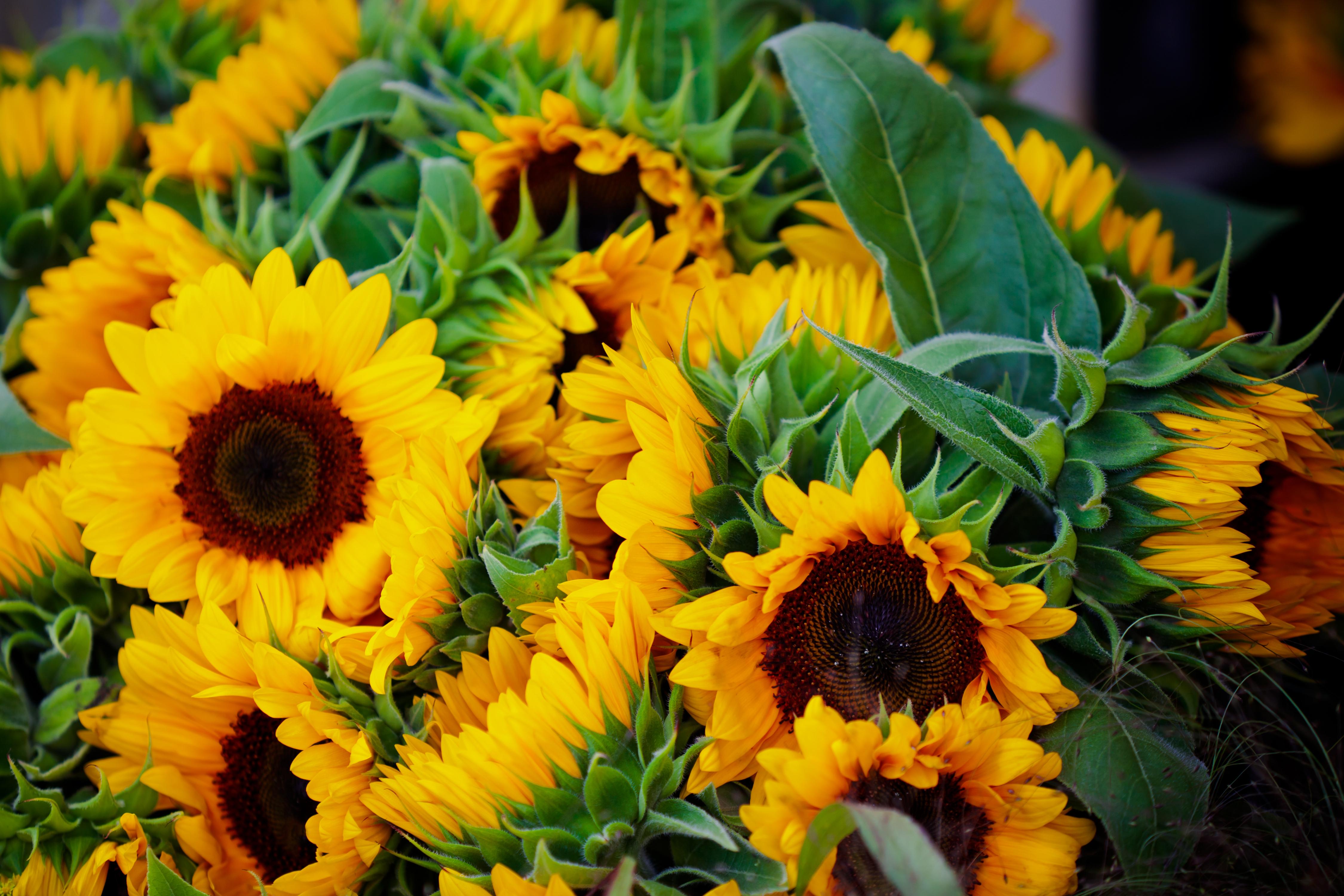Fall Wedding Flowers   Sunflower Wedding Bouquet
